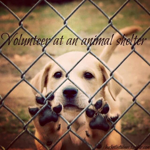 volunteer at an animal shelter